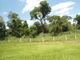 a-aelo-e o-apoio-ao-meio-ambiente